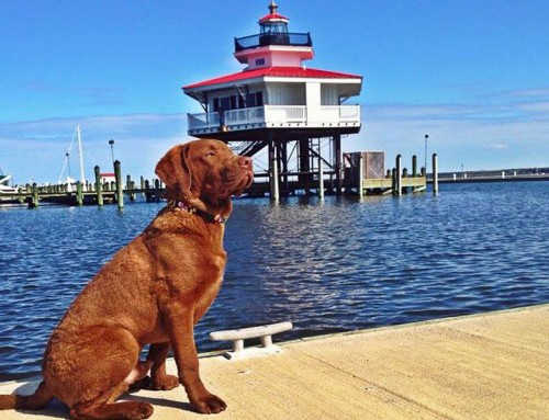 Dogs of Dorchester Photo Contest!