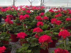 DCTC Greenhouse