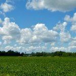 Dorchester Farm Fields