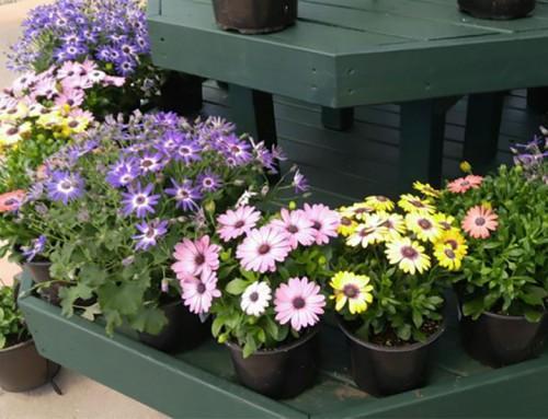 Mowbray's Garden Center