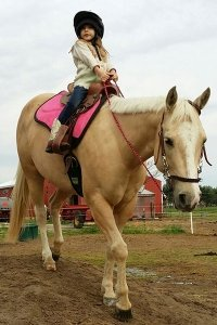 Windy Way Horses