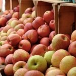 Beckwith Apple Festival in Dorchester County, MD