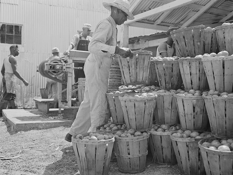 Canning Industry in Dorchester - Courtesy Library of Congress