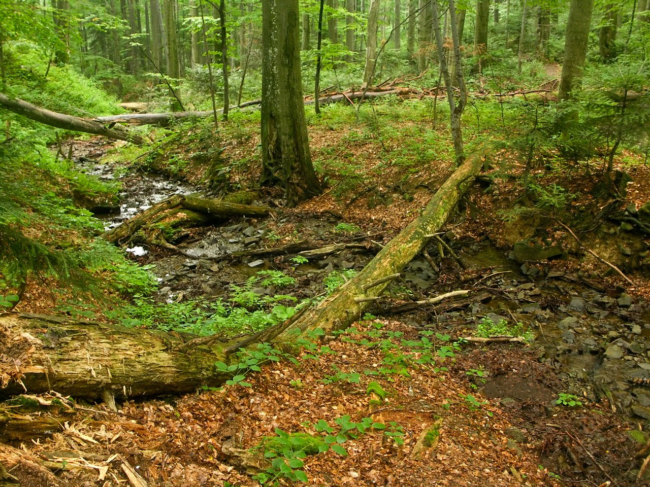 Chesapeake Forest Land