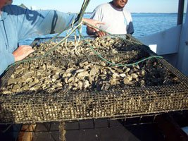 Hoopers Island Oyster Aquaculture Company
