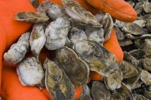 Hoopers Island Oyster Aquaculture