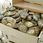 Choptank Oyster Company