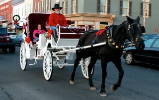 Carriage Rides in Downtown Cambridge, MD