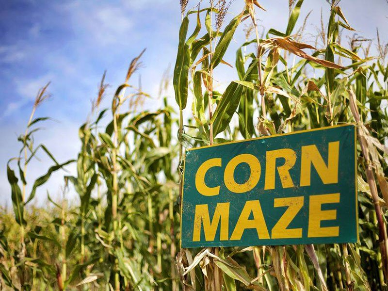 Corn Maze at Breckenridge