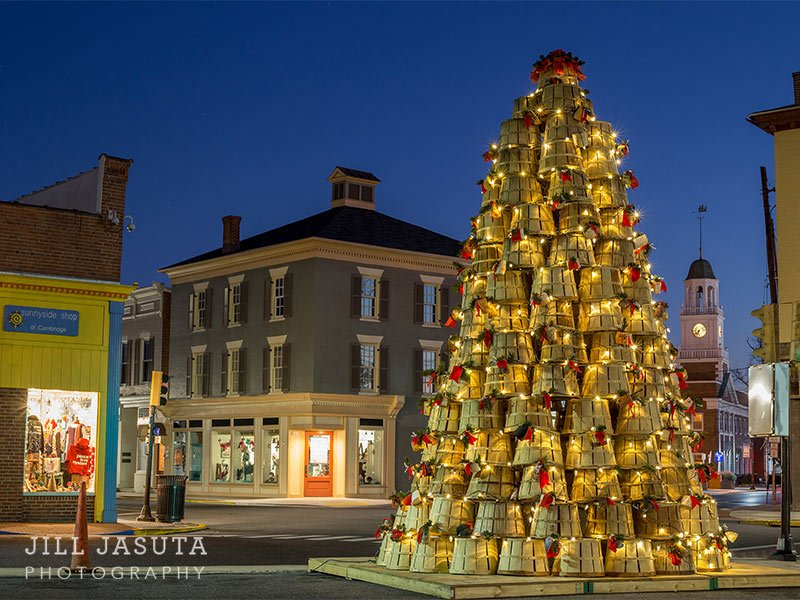 Crab Basket Tree, Cambridge, MD - © Photo by Jill Jasuta