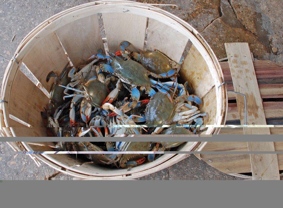 Crabs Bushel
