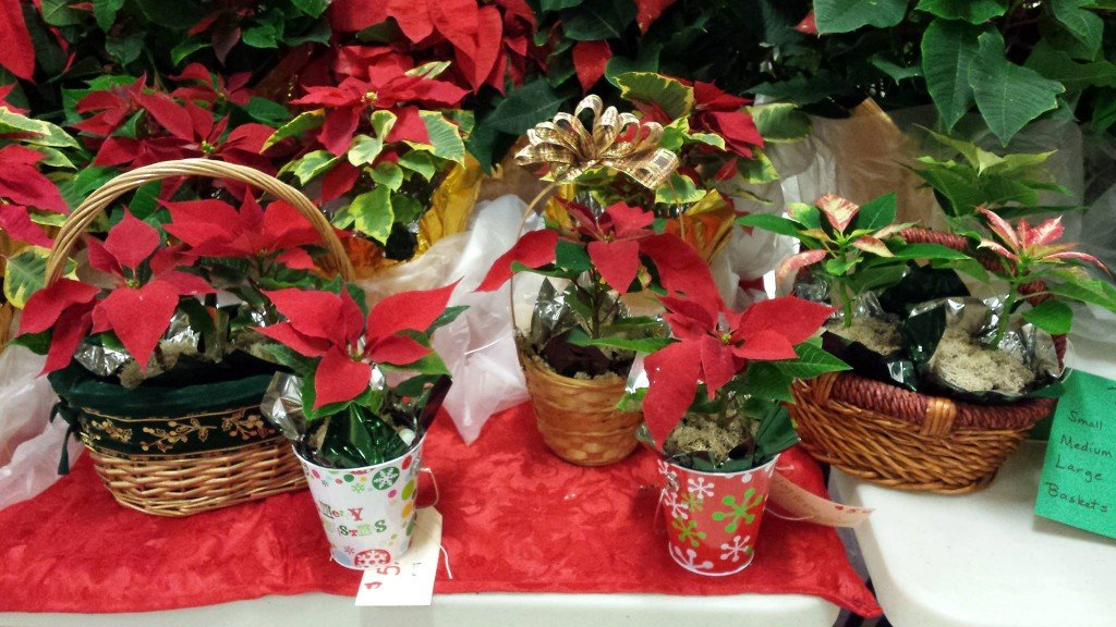 DCTC Greenhouse Holiday Open House