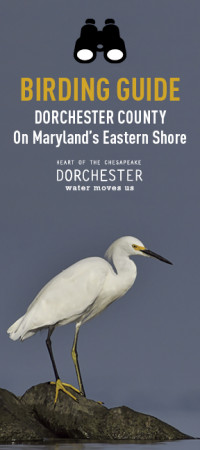 Dorchester Birding Guide