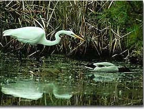 Fishing Bay Water Trails & WMA