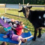Goat Yoga with Over Board Paddle & Fitness at Emily's Produce