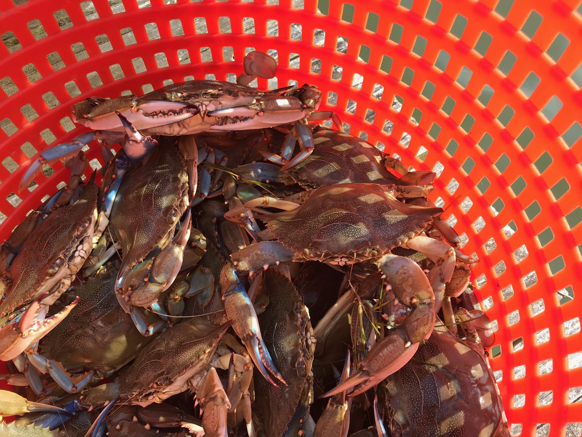 Enjoy a crab feast after crabbing trip