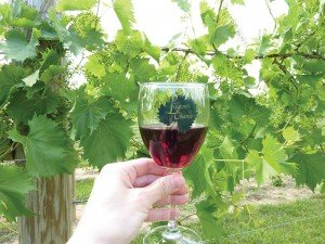 Layton's Chance Winery in Dorchester County, Maryland