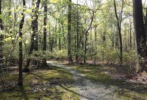 LeCompte Wildlife Management Area