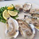 Matchcoat Sojourner - Oyster Farm Tour & Tasting