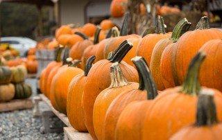Pumpkins at Emily's Produce