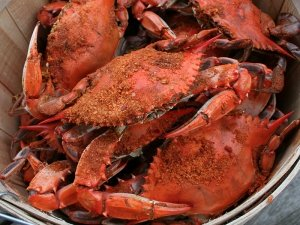 Dorchester County steamed crabs