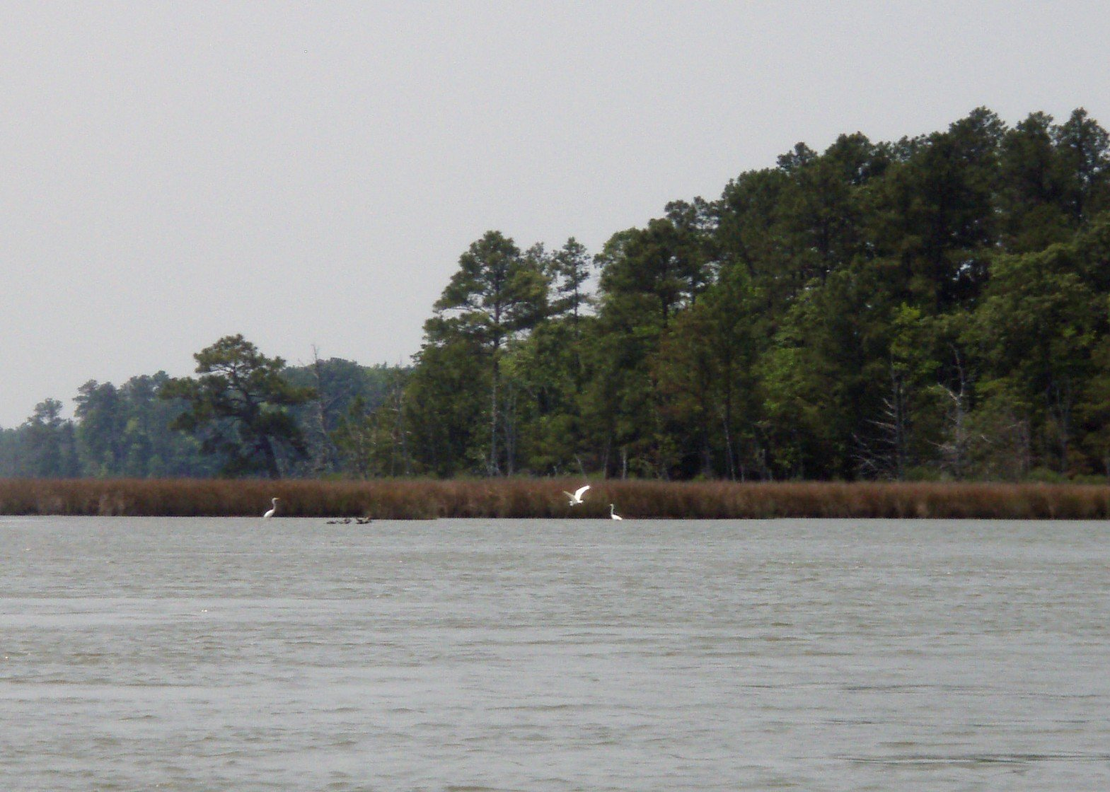 Taylor's Island Wildlife Management Area