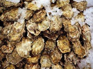 W.M. Abbott + Son Oyster Co - Fat Duck Oysters
