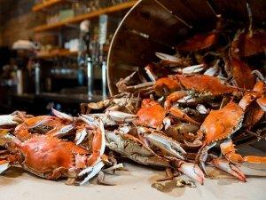 Crabs at Ocean Odyssey, Cambridge