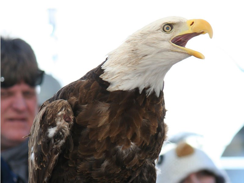 Eagle Festival at Blackwater National Wildlife Refuge, Dorchester County, MD