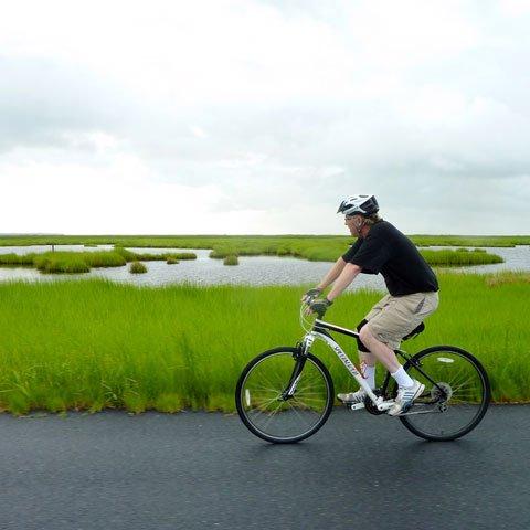 Man riding bike gazing toward Dorchester Maryland marshes